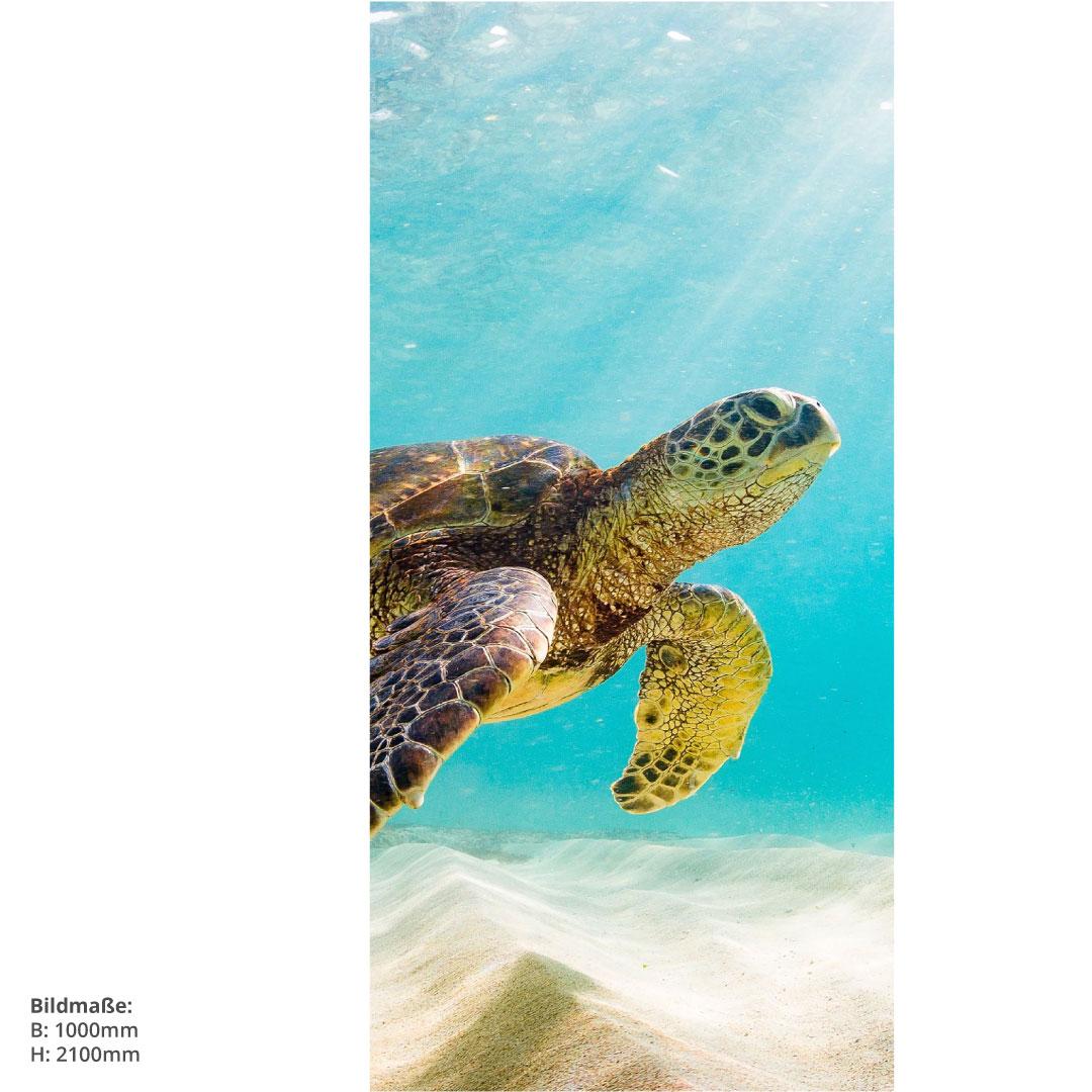 Duschrückwand Schildkröte Massen