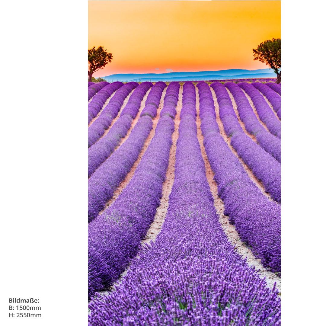 Duschrückwand Lavendel Frankreich Grössen