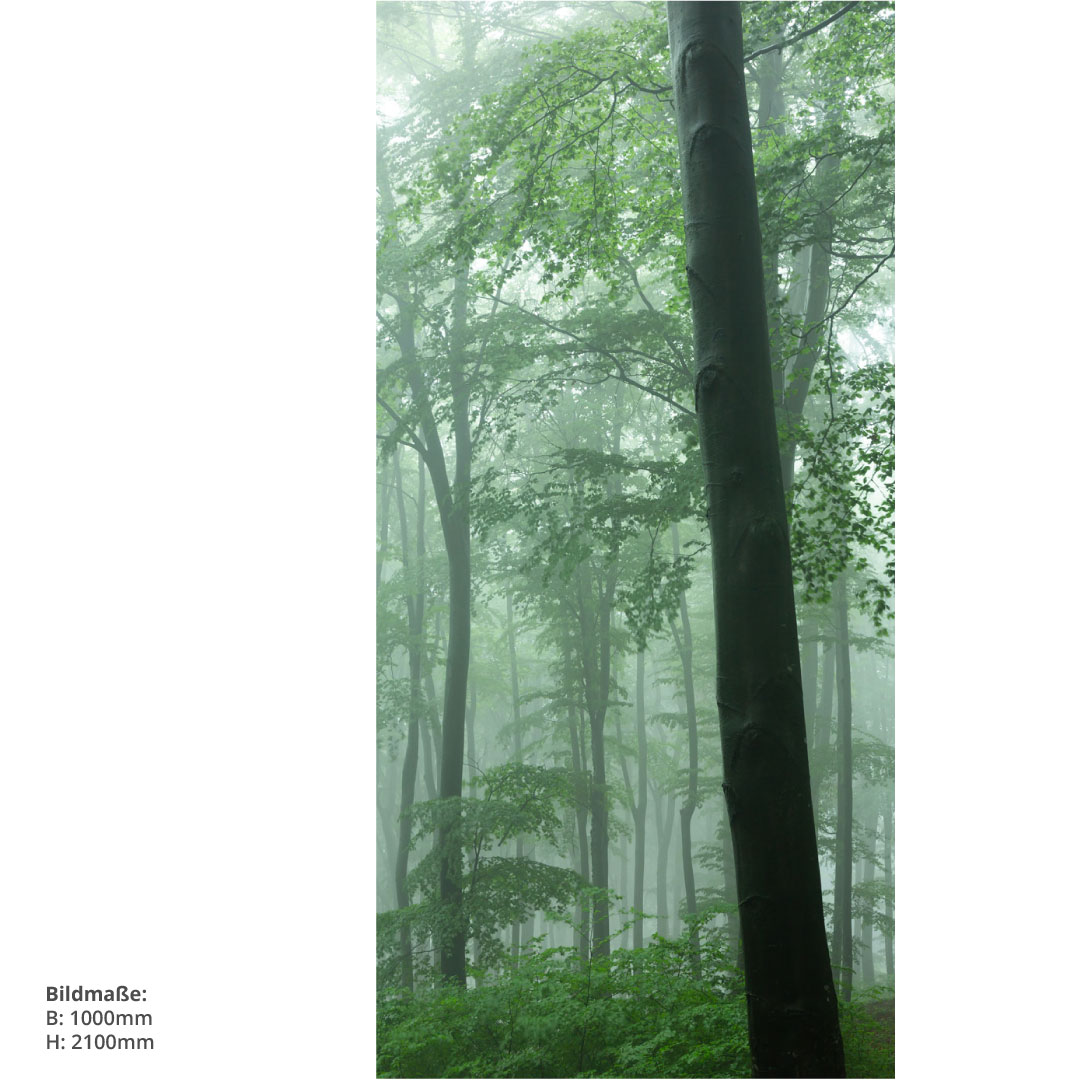 Duschrückwand Nebeligen Wald