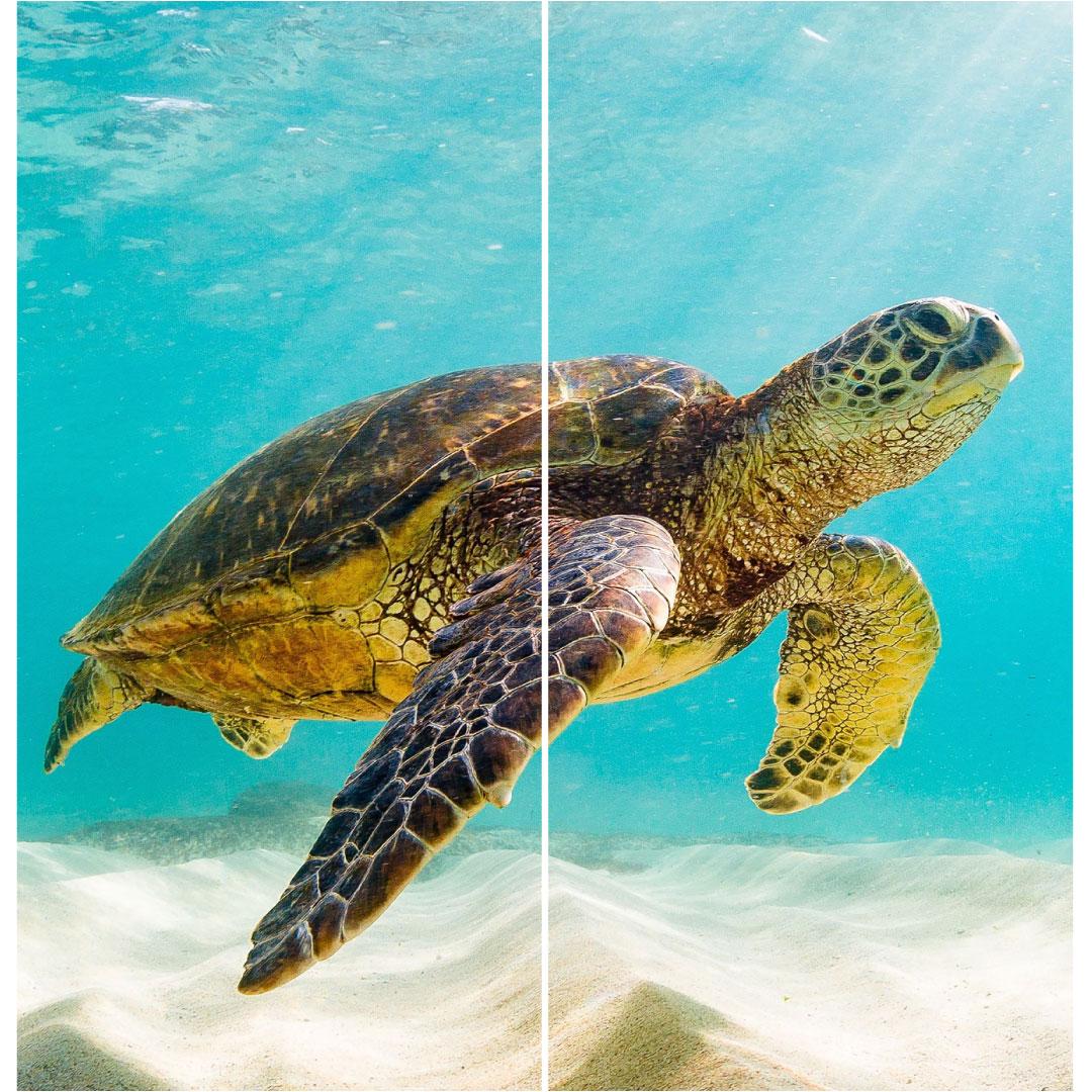 Duschrückwand Schildkröte