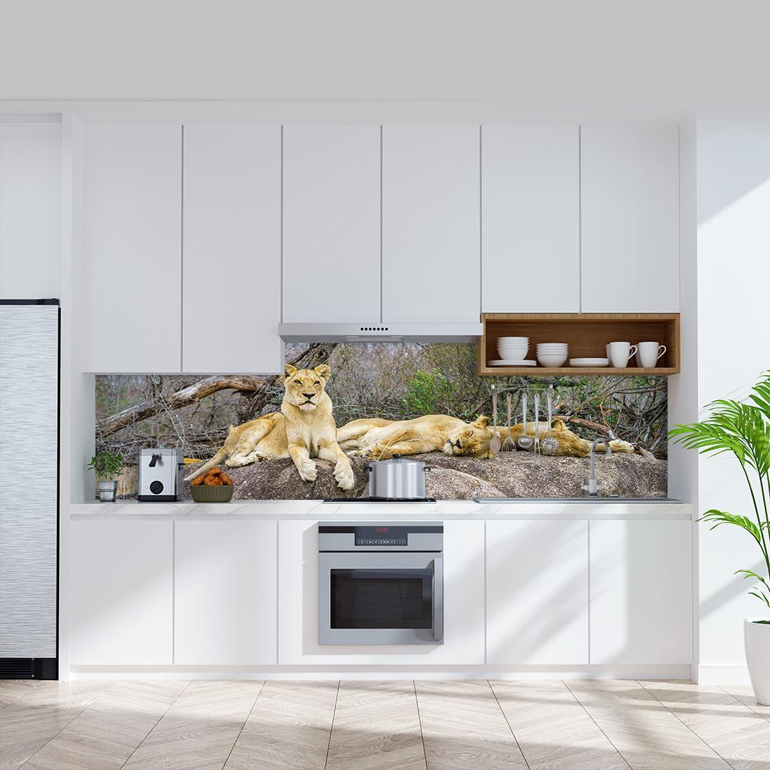 Küchenrückwand Löwen Südafrika