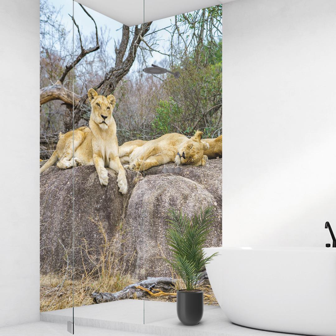 Duschrückwand Löwen Südafrika über Eck Set