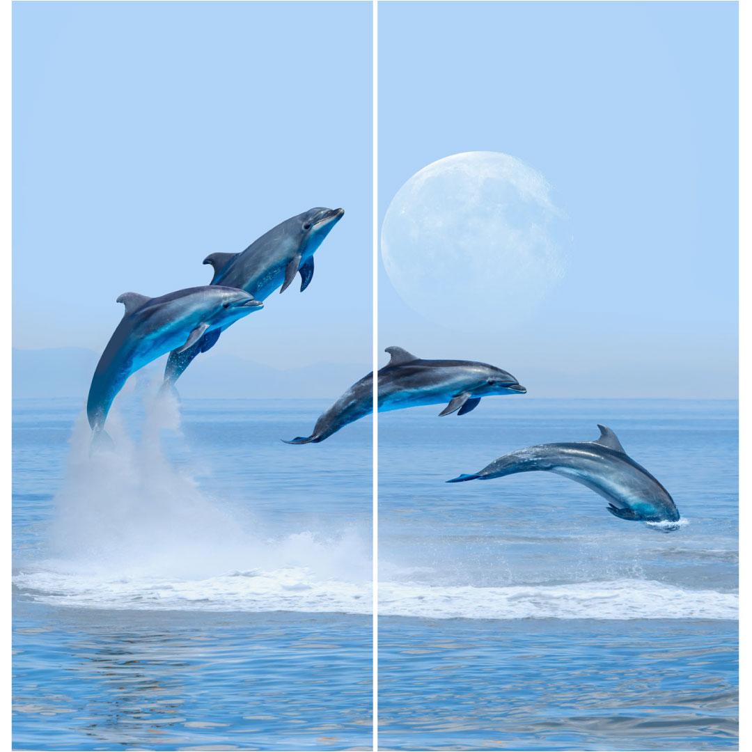 Duschrückwand Delfine Grössen